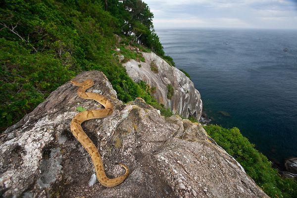 Resultado de imagen para la isla de las serpientes brasil