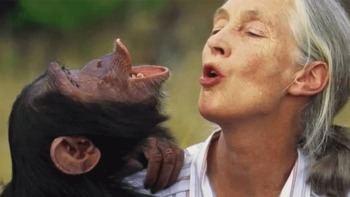 La primatóloga Jane Goodall, doctora honoris causa de la Complutense